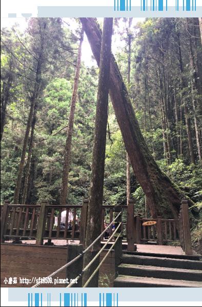 107.6.9.(80)杉林溪森林遊樂區.JPG