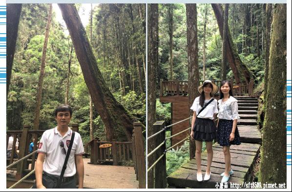 107.6.9.(81)杉林溪森林遊樂區.JPG