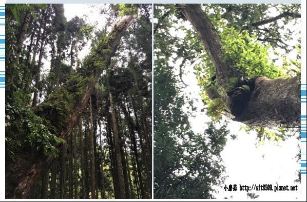 107.6.9.(83)杉林溪森林遊樂區.JPG