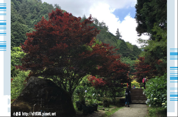 107.6.9.(137)杉林溪森林遊樂區.JPG