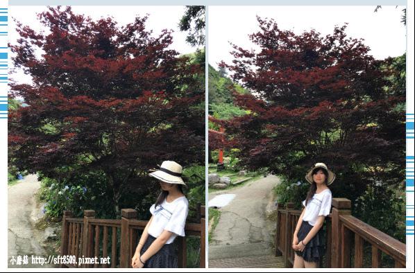 107.6.9.(145)杉林溪森林遊樂區.JPG