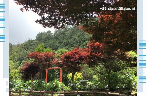 107.6.9.(167)杉林溪森林遊樂區.JPG