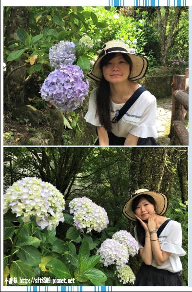 107.6.9.(171)杉林溪森林遊樂區.JPG