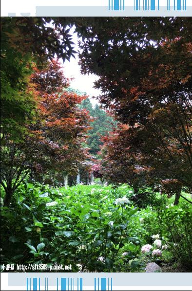 107.6.9.(173)杉林溪森林遊樂區.JPG