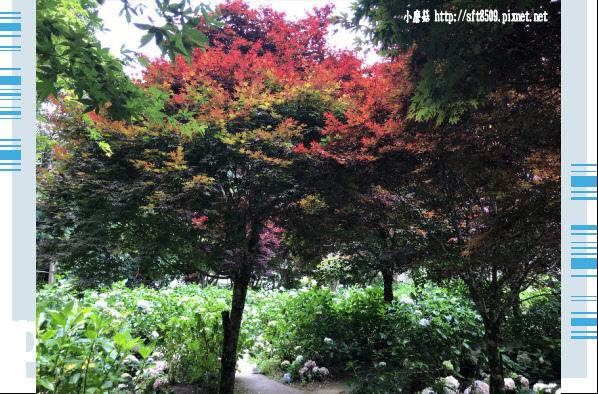 107.6.9.(174)杉林溪森林遊樂區.JPG
