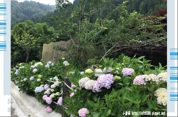 107.6.9.(198)杉林溪森林遊樂區.JPG