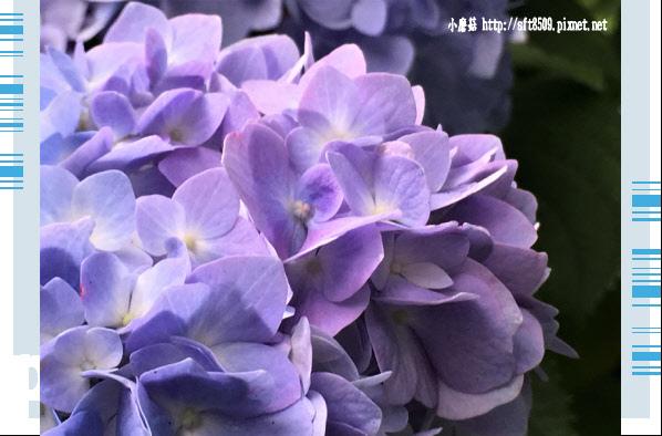 107.6.9.(249)杉林溪森林遊樂區.JPG