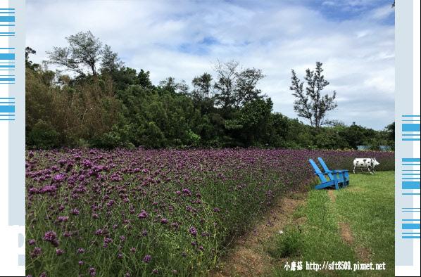 107.6.17.(19)青林農場.JPG