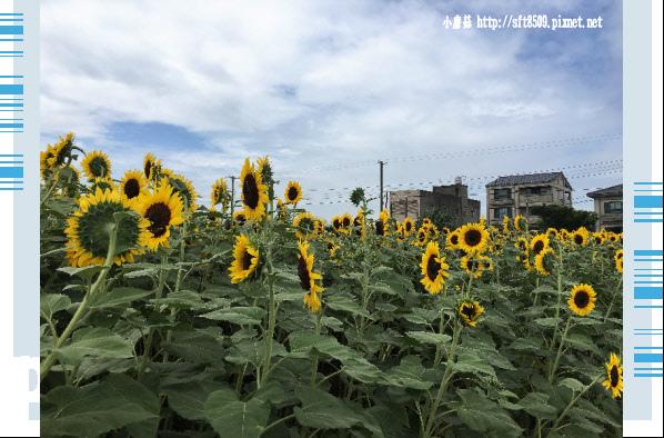 107.6.17.(1)向陽農場.JPG