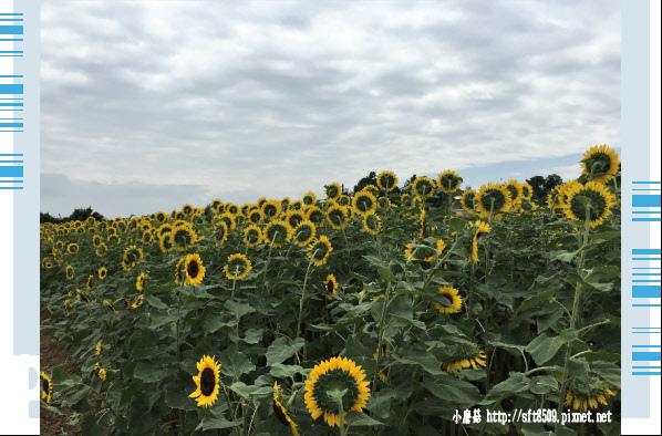107.6.17.(4)向陽農場.JPG