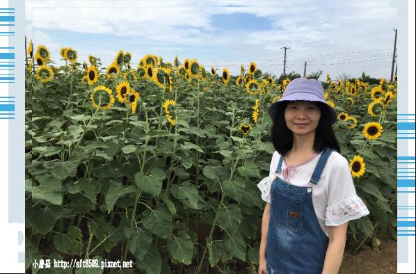 107.6.17.(3)向陽農場.JPG