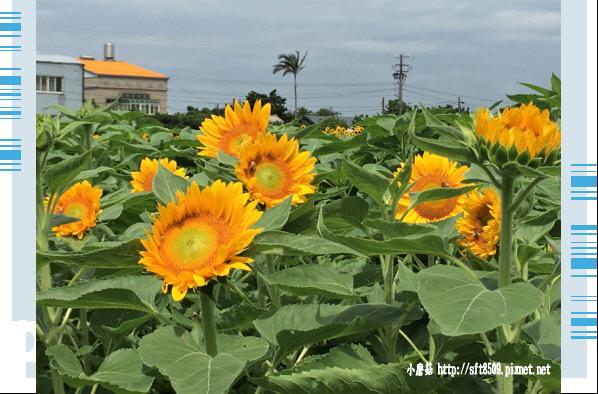 107.6.17.(9)向陽農場.JPG