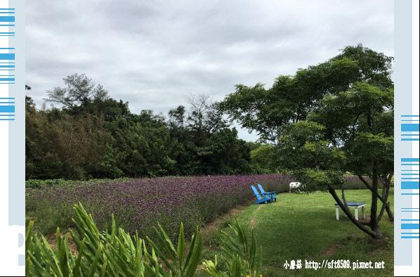 107.6.17.(17)青林農場.JPG