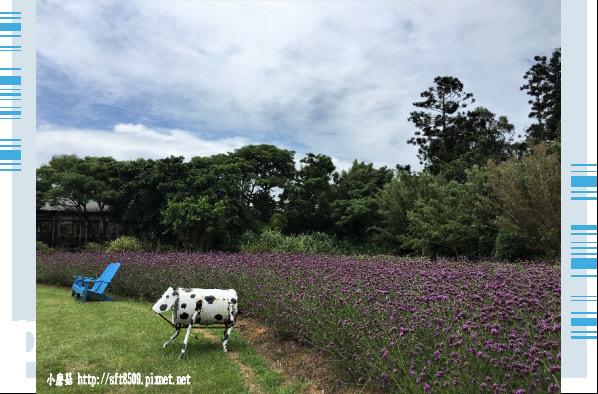 107.6.17.(55)青林農場.JPG