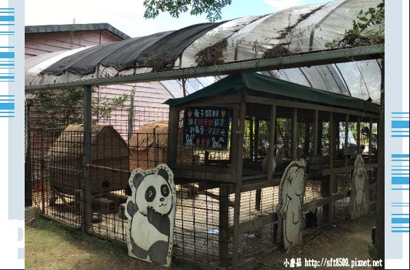 107.6.17.(93)青林農場.JPG
