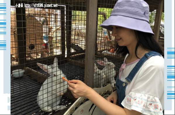 107.6.17.(97)青林農場.JPG