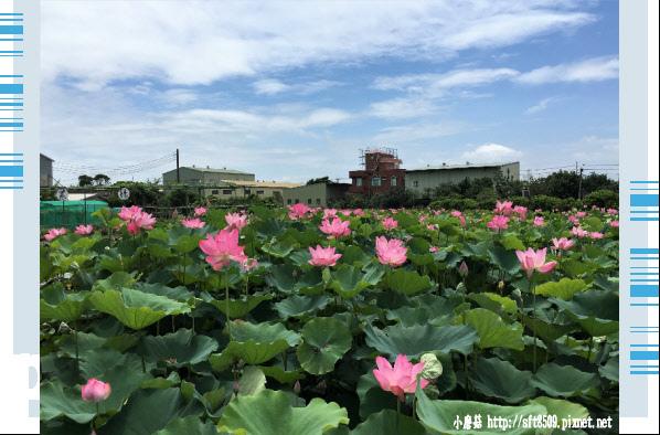 107.6.17.(100)青林農場.JPG
