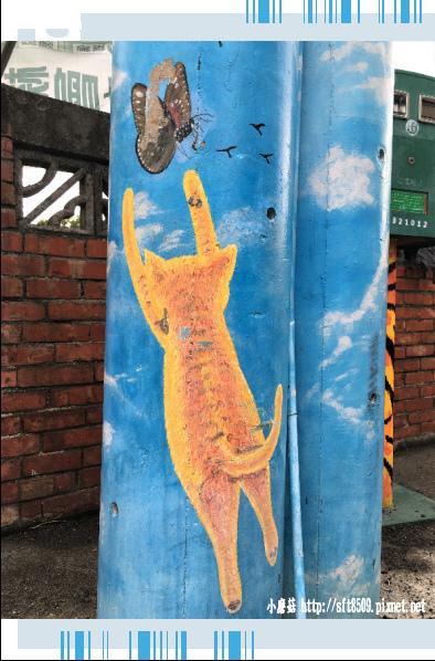 107.6.30.(2)雲林虎尾-屋頂上的貓.JPG