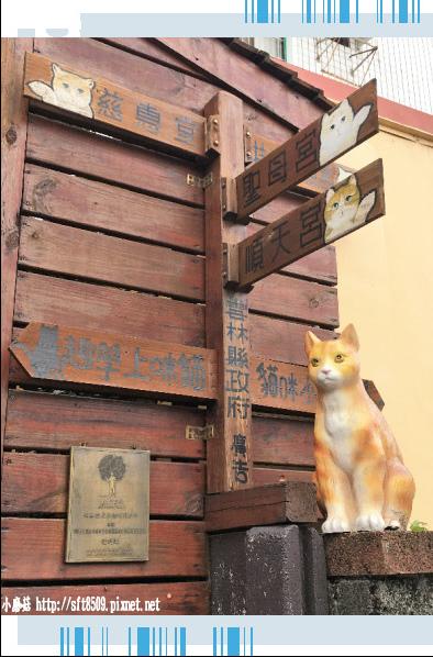 107.6.30.(42)雲林虎尾-屋頂上的貓.JPG