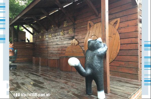 107.6.30.(46)雲林虎尾-屋頂上的貓.JPG