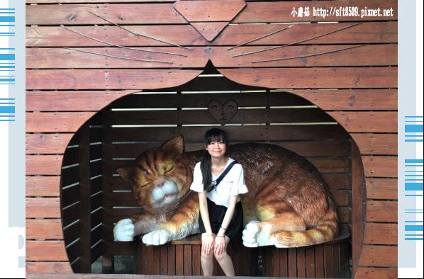 107.6.30.(61)雲林虎尾-屋頂上的貓.JPG