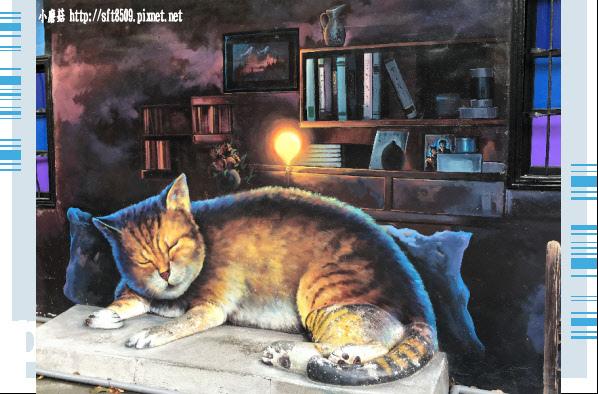 107.6.30.(73)雲林虎尾-屋頂上的貓.JPG