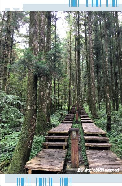 107.6.22.(56)明池森林遊樂區.JPG