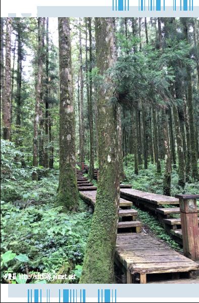 107.6.22.(57)明池森林遊樂區.JPG