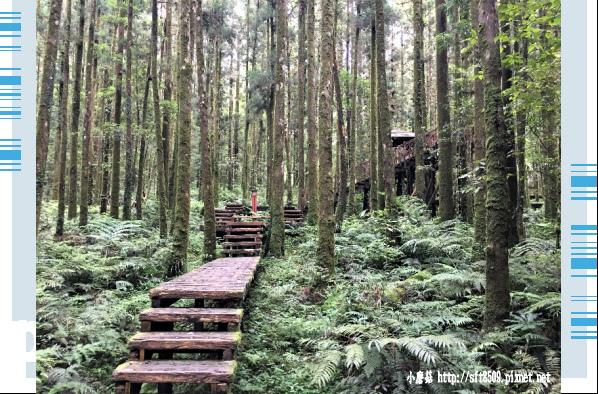 107.6.22.(61)明池森林遊樂區.JPG