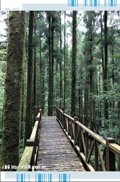 107.6.22.(68)明池森林遊樂區.JPG
