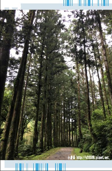 107.6.22.(90)明池森林遊樂區.JPG