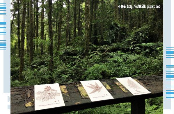 107.6.22.(96)明池森林遊樂區.JPG