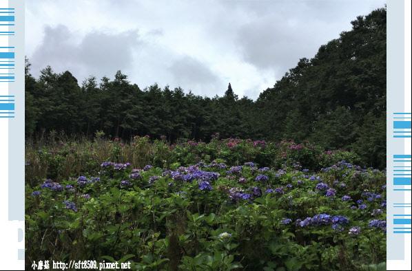 107.6.22.(176)明池森林遊樂區.JPG