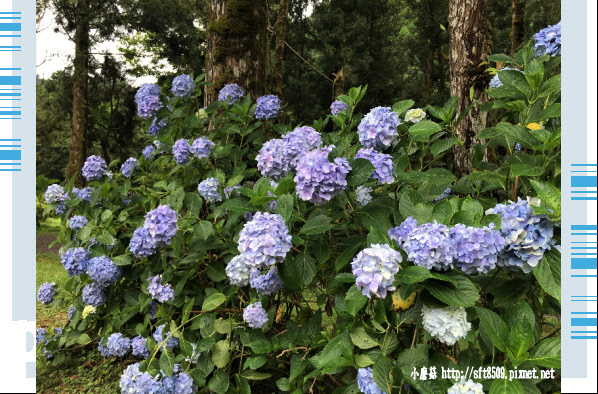 107.6.22.(187)明池森林遊樂區.JPG