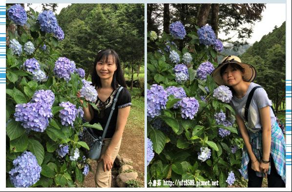 107.6.22.(199)明池森林遊樂區.JPG
