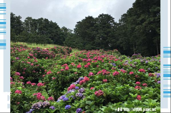 107.6.22.(219)明池森林遊樂區.JPG