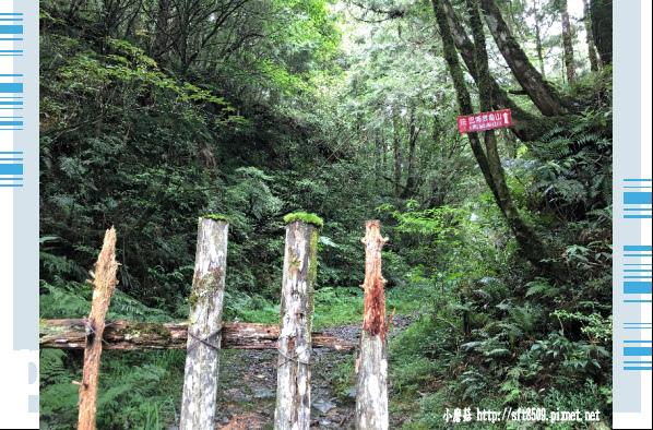 107.6.22.(250)明池森林遊樂區.JPG
