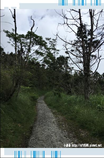 107.6.23.(46)太平山-翠峰湖環山步道.JPG