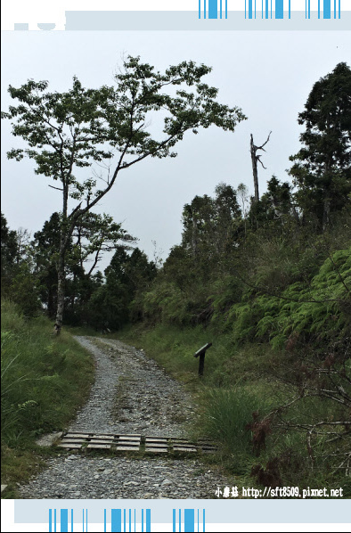 107.6.23.(49)太平山-翠峰湖環山步道.JPG