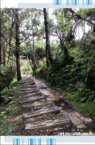 107.6.23.(52)太平山-翠峰湖環山步道.JPG