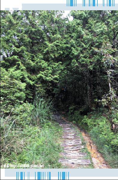 107.6.23.(54)太平山-翠峰湖環山步道.JPG
