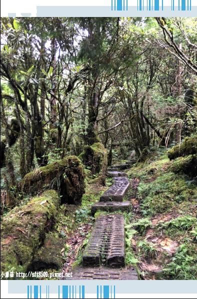 107.6.23.(56)太平山-翠峰湖環山步道.JPG