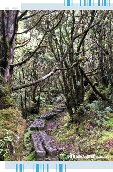 107.6.23.(57)太平山-翠峰湖環山步道.JPG
