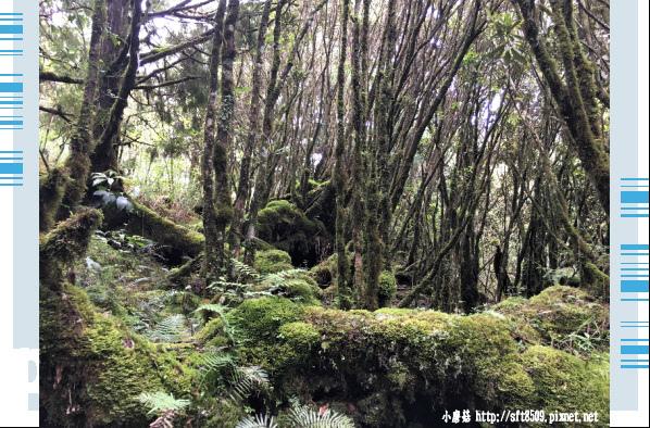 107.6.23.(59)太平山-翠峰湖環山步道.JPG