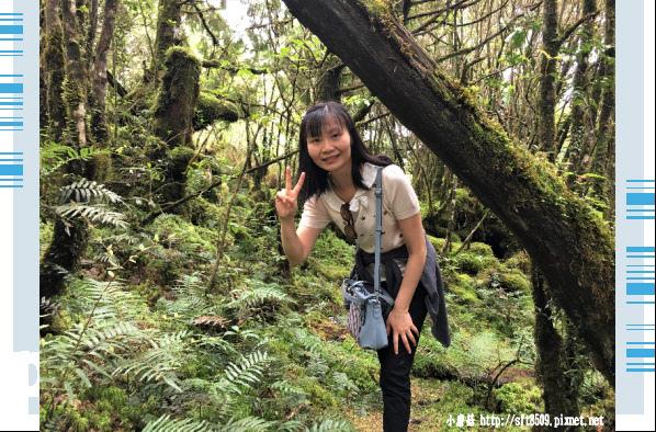107.6.23.(61)太平山-翠峰湖環山步道.JPG