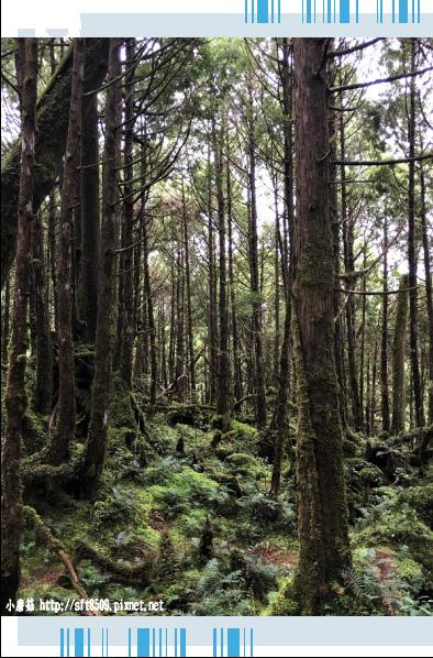 107.6.23.(99)太平山-翠峰湖環山步道.JPG