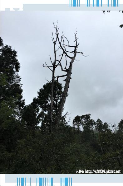 107.6.23.(117)太平山-翠峰湖環山步道.JPG