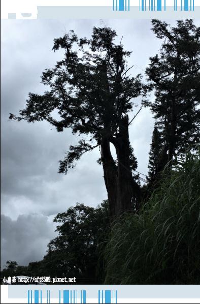107.6.23.(120)太平山-翠峰湖環山步道.JPG