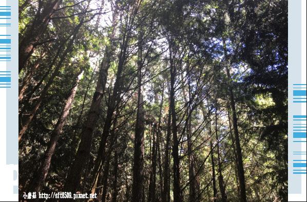 107.6.24.(25)武陵農場-桃山瀑布.JPG