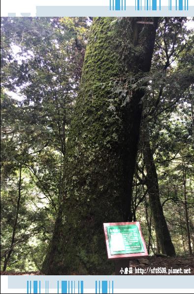 107.6.24.(43)武陵農場-桃山瀑布.JPG